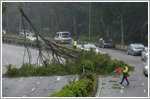 Fallen branches and uprooted trees block traffic cause damage to three cars