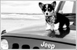 Jeep launches first 'JeepTopCanine' search on social media