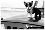 Jeep announces eight 'JeepTopCanine' finalists