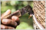 Porsche and Michelin support Sumatran small rubber plantation farmers