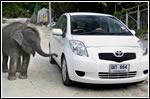 Road Trip - Toyota Yaris Gasohol E-20 in Phuket